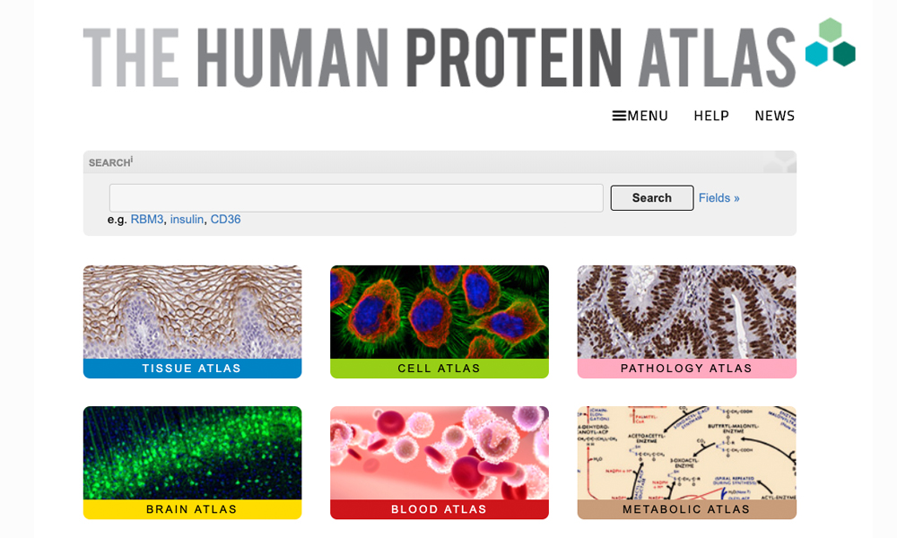 Triple A Polyclonals on the Human Protein Atlas